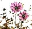 flowers-209144__340